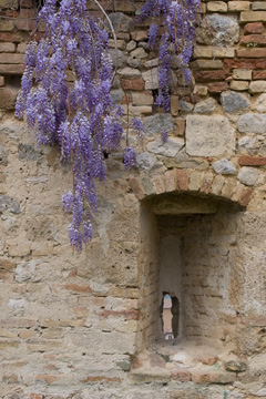 Wisteria and stone wall
