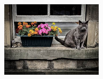 Edinburgh cat & flowers